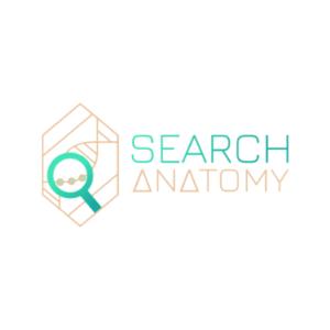 Search Anatomy logo - Etymon Singapore